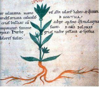 A medieval plant