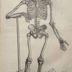 Osteology, Palaeopathology and Forensics