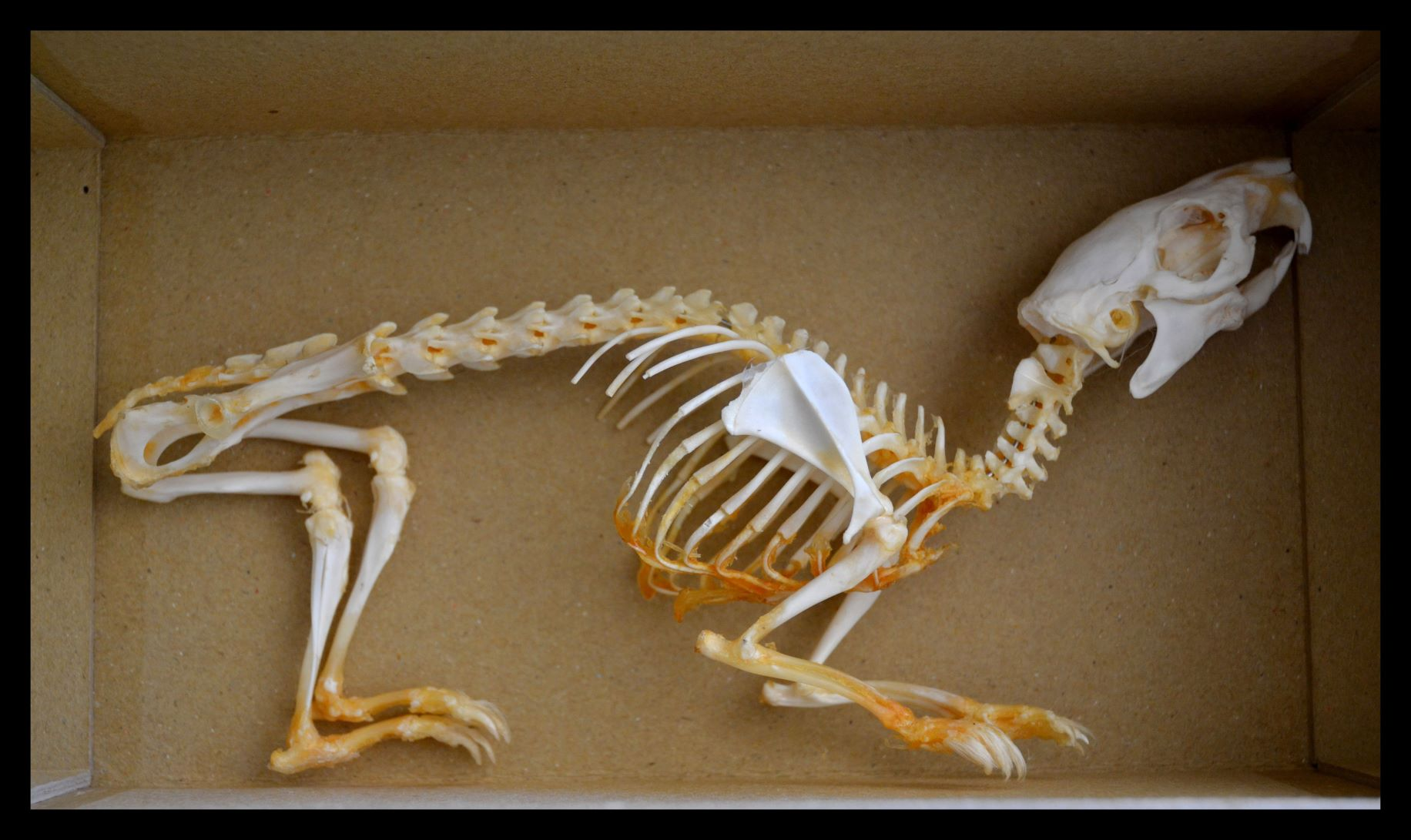 Zooarchaeology and Faunal remains